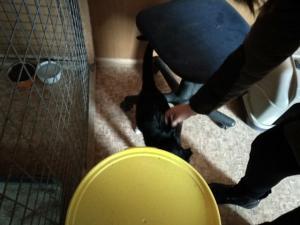 2018-12-17 Akcija beglobiams gyvūnams