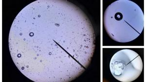 24 Sniegas vaizdas per mikroskopa