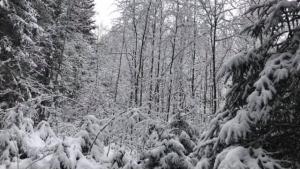 29 Sniegas 1 Gabriele Liauciute 6a